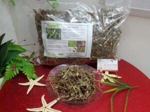 Cây cỏ xước Thảo Dược Thanh Bình