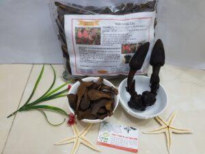 Nấm ngọc cẩu Thảo Dược Thanh Bình