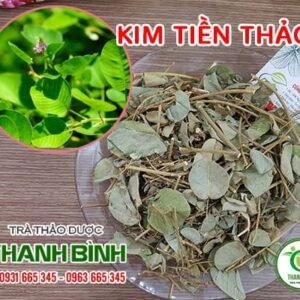 Kim tiền thảo Thảo Dược Thanh Bình