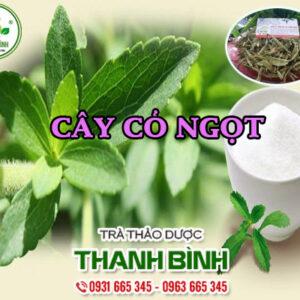 Cây cỏ ngọt Thảo Dược Thanh Bình