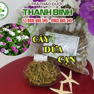 Cây dừa cạn Thảo Dược Thanh Bình