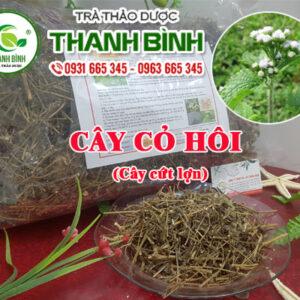 Cây cỏ hôi Thảo Dược Thanh Bình