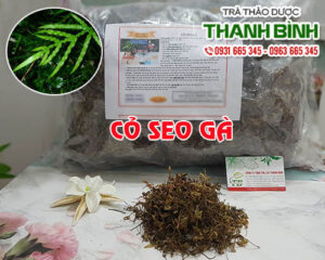 Cỏ seo gà Thảo Dược Thanh Bình