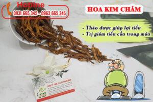 Hoa kim châm Thảo Dược Thanh Bình