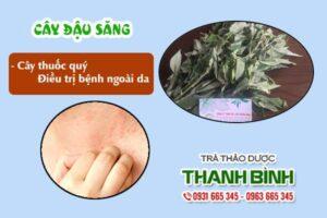 Cây đậu săng Thảo Dược Thanh Bình