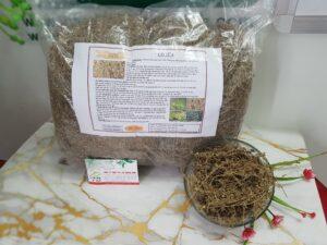 Cây cỏ sữa Thảo Dược Thanh Bình